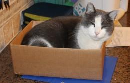 Pokey in a box.