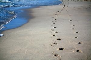 footprints-456732_1280