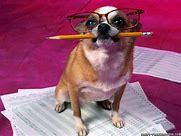 writing dog